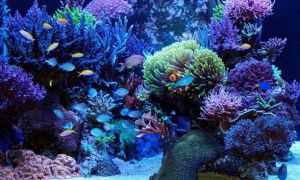 Виды морских рыбок и требования к их содержанию