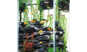 Каких рыб заселить в узкий и высокий аквариум?