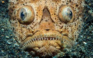 Самые необычные и причудливые рыбы — теперь я видел все!