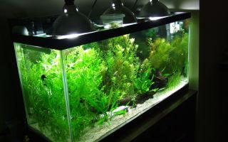 Существуют ли аквариумы без рыбок?