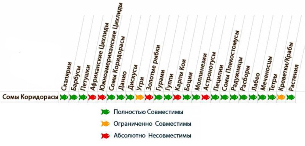Таблица совместимости коридорасов