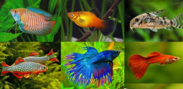 Рыбки для круглого аквариума