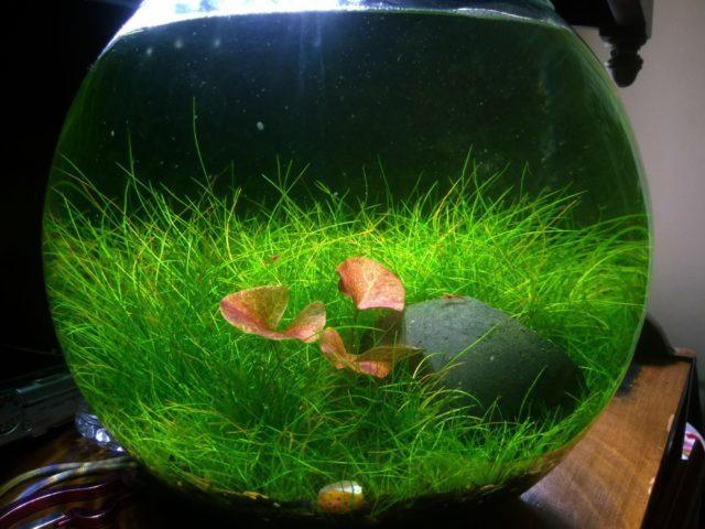 Минималистичный круглый аквариум