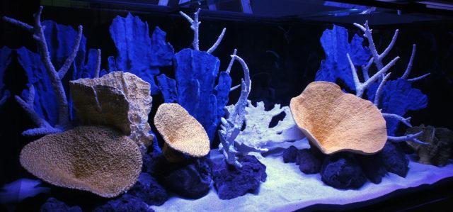 Искусственный риф