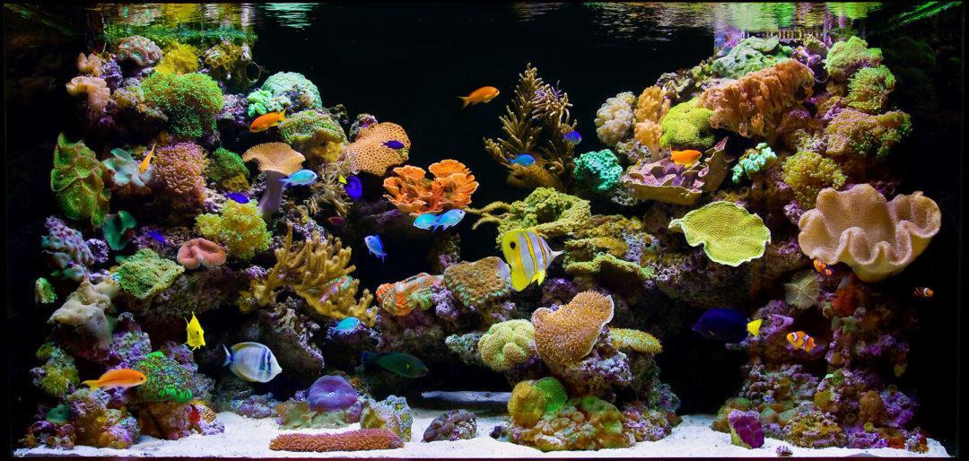Как запустить и содержать морской аквариум дома