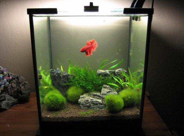 Мини аквариум для петушка