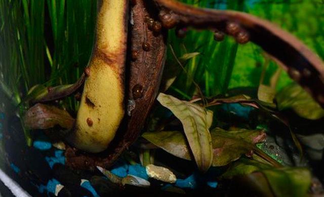 Улитки на банане