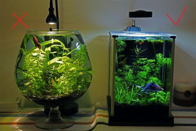Мини аквариум с петушком