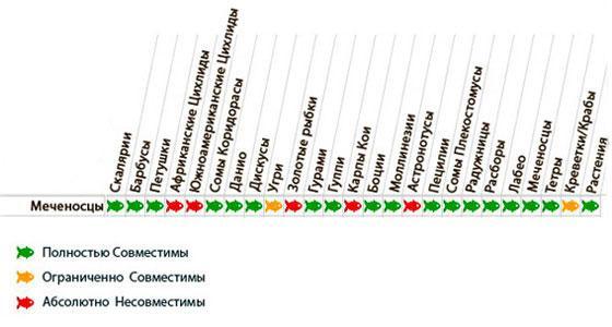 Таблица совместимости меченосцев
