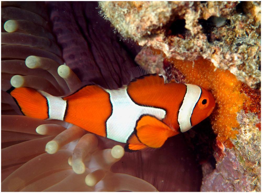 о рыбе клоун с картинками исмаилов это очень