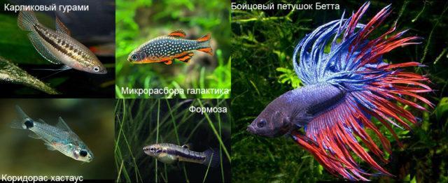 Рыбы для нано и мини аквариума