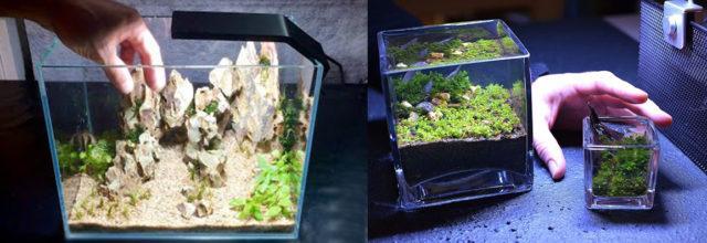Мини аквариумы разного объема