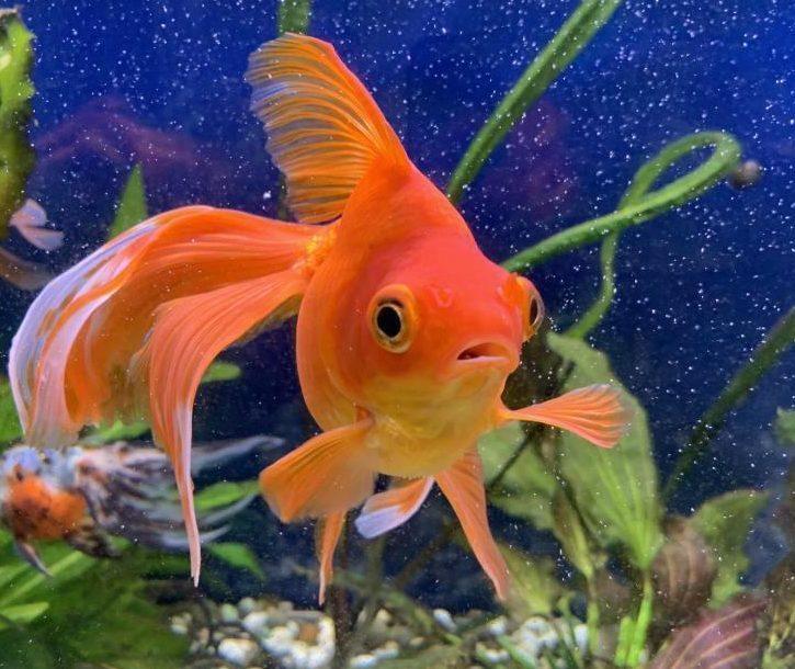 январь все картинки домашних рыб поиск ресторанов кафе