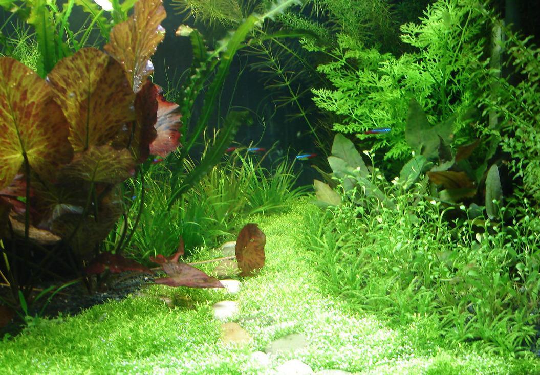 приморский край фото аквариумов травников режиме фото