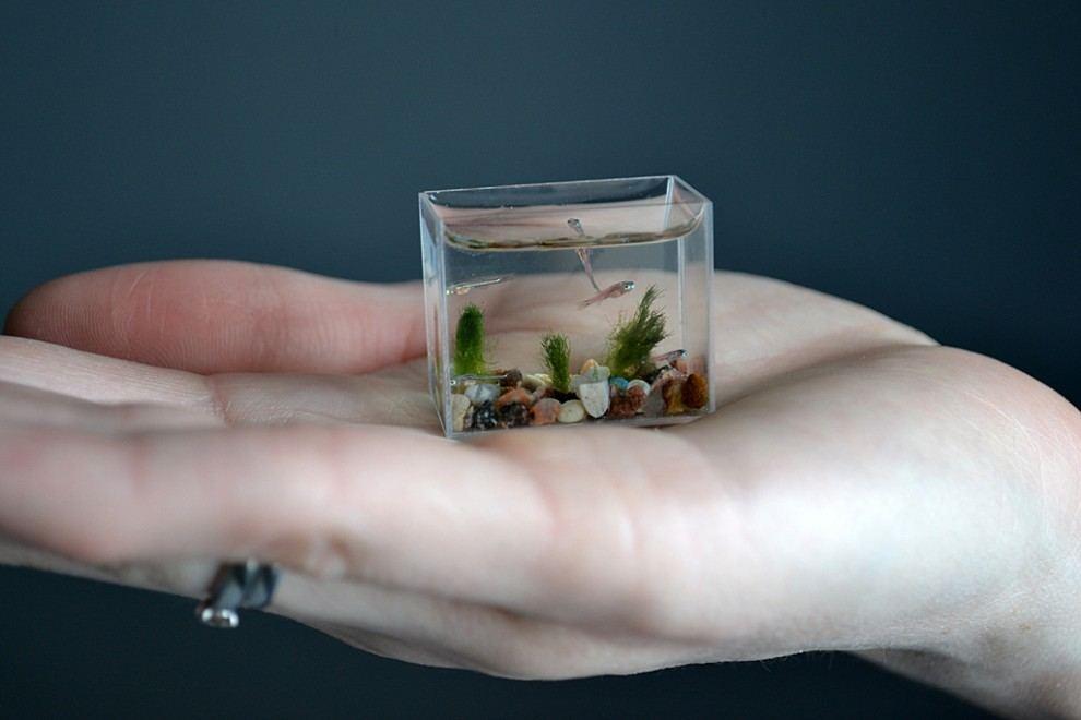 Самый маленький аквариум