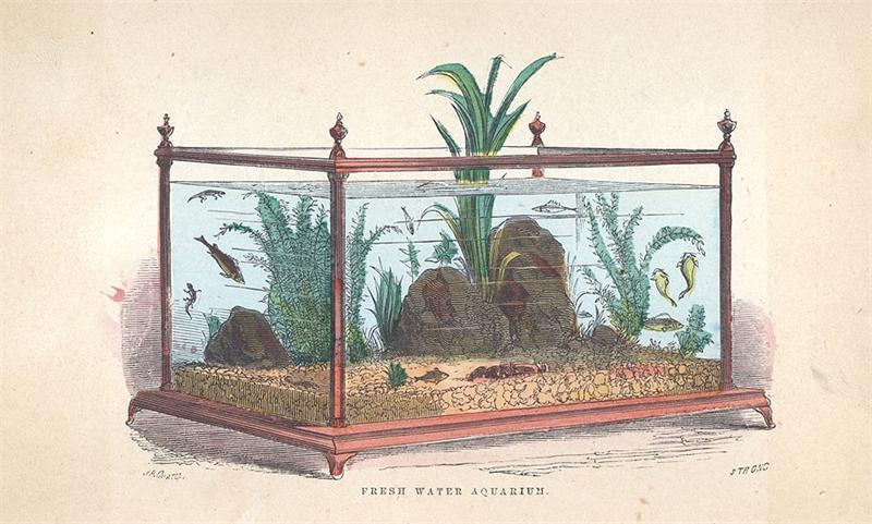 Первый аквариум