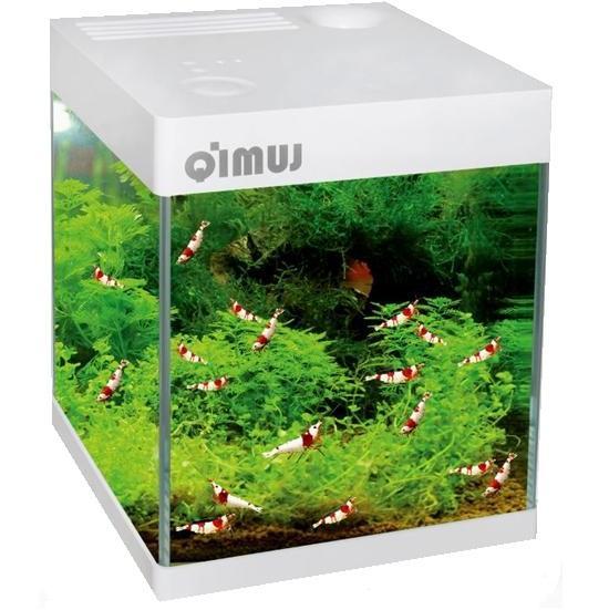 Аквариум для креветок куб