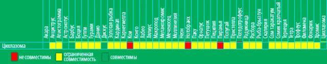 Таблица совместимости цихлазомы северум