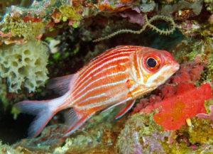 Рыба белка