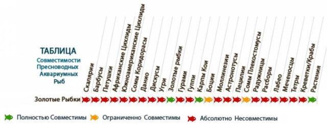 Таблица совместимости золотых рыбок