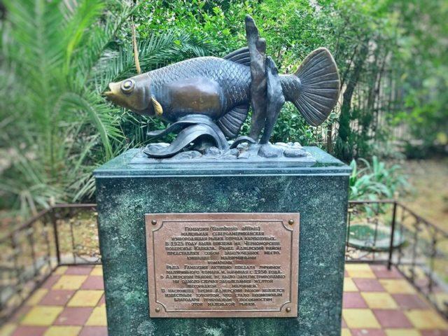 Памятник гамбузии в Адлере