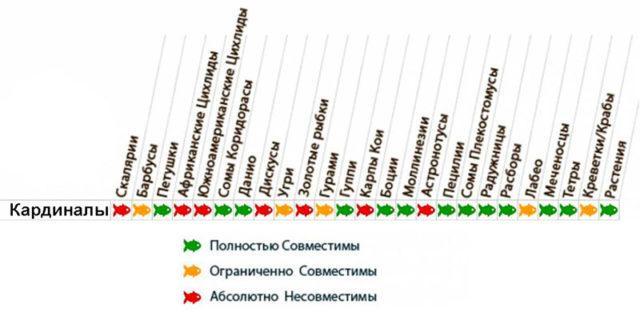 Таблица совместимости кардиналов с другими рыбками