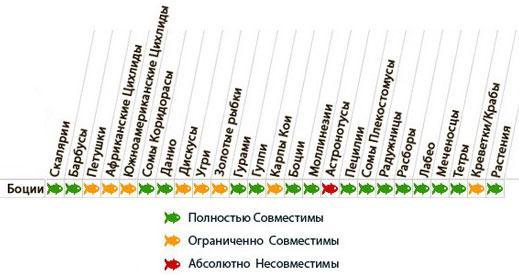Таблица совместимости боции