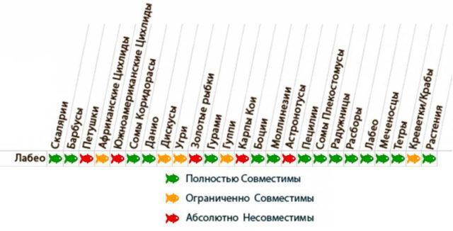 Таблица совместимости лабео с другими рыбками