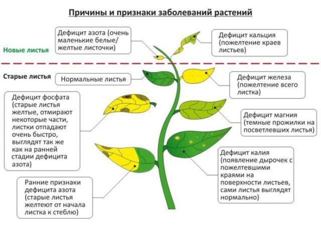 Нехватка питательных веществ у аквариумных растений